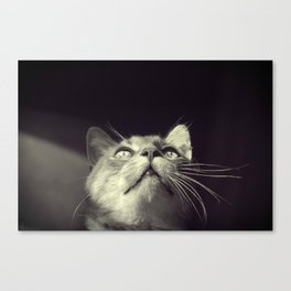Not Curious at All Canvas Print