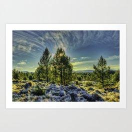 Winter sunshine on a frosty forest Art Print