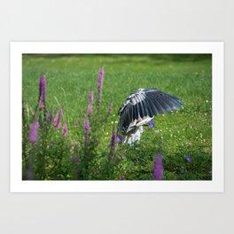 Welcome Heron Art Print