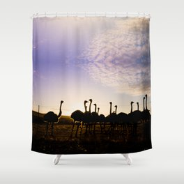 Ostriches at sunset Shower Curtain