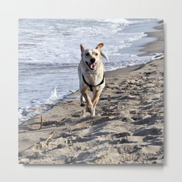 BEACH DOG - SICILY Metal Print
