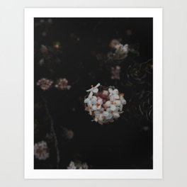 Wildflower Series  - Tasmania Art Print
