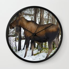 Mother mosse in the snow, Jasper National Park Wall Clock