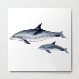 Atlantic spotted dolphin Metal Print