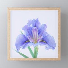 Iris flower Framed Mini Art Print