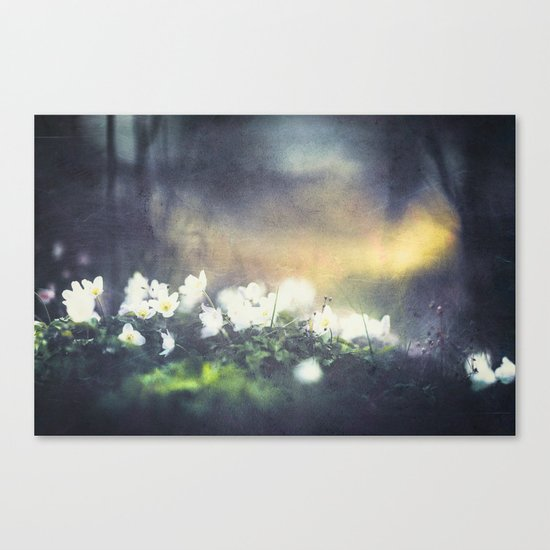 Rugged beauty Canvas Print
