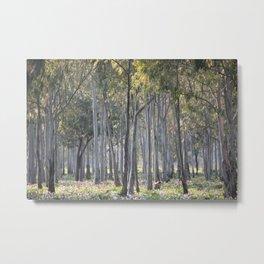 Sunrise Forest Metal Print