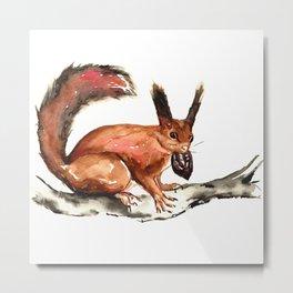 Eurasian Red Squirrel Metal Print
