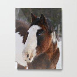 Wolly Talon (horse) Metal Print