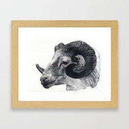 Goat head Framed Art Print