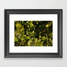 Green is the new black. Framed Art Print