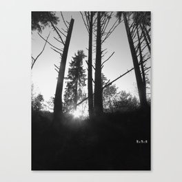 The Roots of Light.  Canvas Print