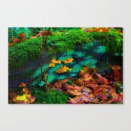 tillamook forest oregon Canvas Print