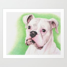 The White Boxer Art Print