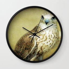 The Saker Falcon Stare Wall Clock