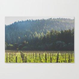 Anderson Valley Vineyard #3 Canvas Print