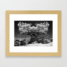 Conjoined Torrey Pines in Infrared Framed Art Print