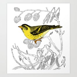 Technicolour Siskin Art Print