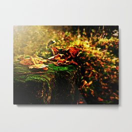 Richness of Autumn.  Metal Print