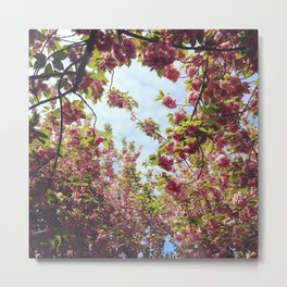 Cherry Blossom Delight 2 Metal Print