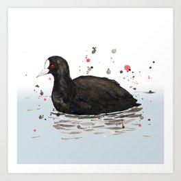 Common coot Art Print