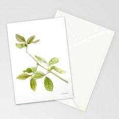 A branch of the tree Psidium fortium Stationery Cards