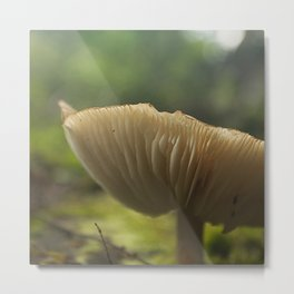 Mushroom in the Woods Metal Print