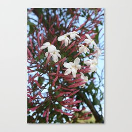 Pink Buds and Jasmine Blossom Close Up Canvas Print