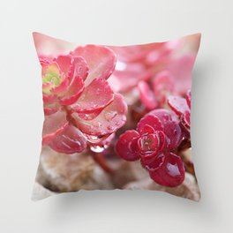 Succulent Garden Cactus Red Flowers Tropical Cacti with drops Throw Pillow