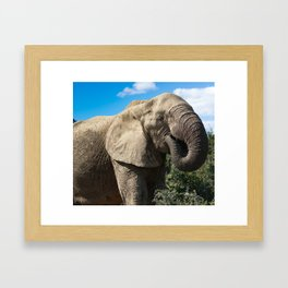 african elphant Framed Art Print
