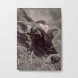 Dairy Cow Eating Grass bw Metal Print