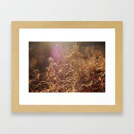 Sun Flare Framed Art Print