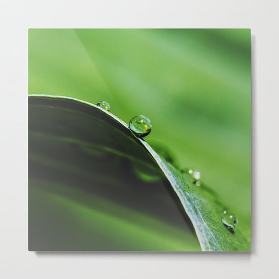 drops on green Metal Print