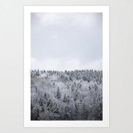 white winter FOREST Art Print