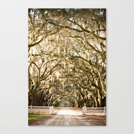 Wormsloe Plantation - Savannah, Ga Canvas Print