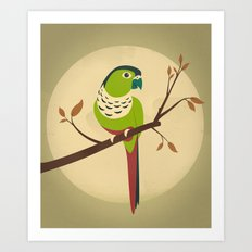 Green Cheek Conure Art Print