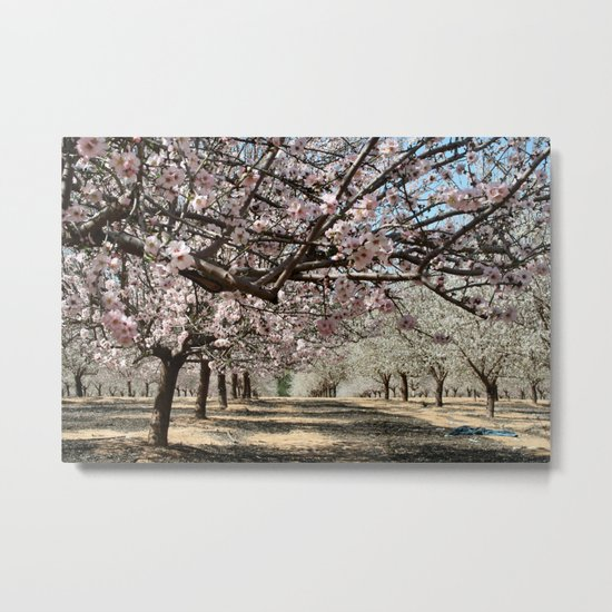 Almond Trees Metal Print