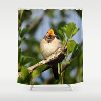 swallow Shower Curtains featuring Singing swallow by Ria Pi