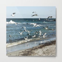 FLYING SEAGULLS Metal Print