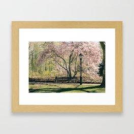 Magnolia's Bloom in Central Park Framed Art Print