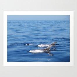 Beautiful risso´s dolphins in Tenerife Art Print