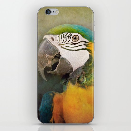 Portrait of a Parrot iPhone & iPod Skin