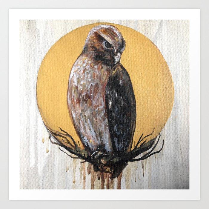 Hawk Vision Art Print