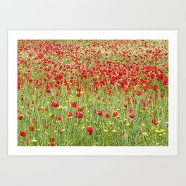 Meadow With Beautiful Bright Red Poppy Flowers  Art Print