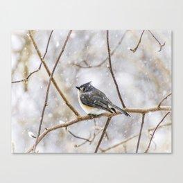Snowy Titmouse Canvas Print