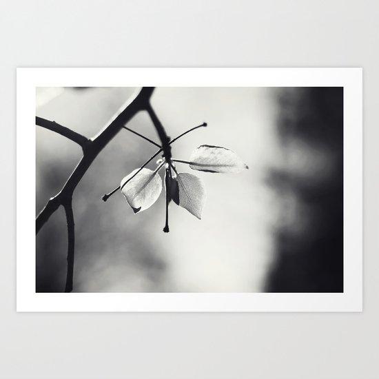 Spring Leaves in Black and White II Art Print