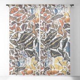 Butterflies of North America Pattern Sheer Curtain