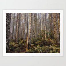 Sunlight in the forest Art Print