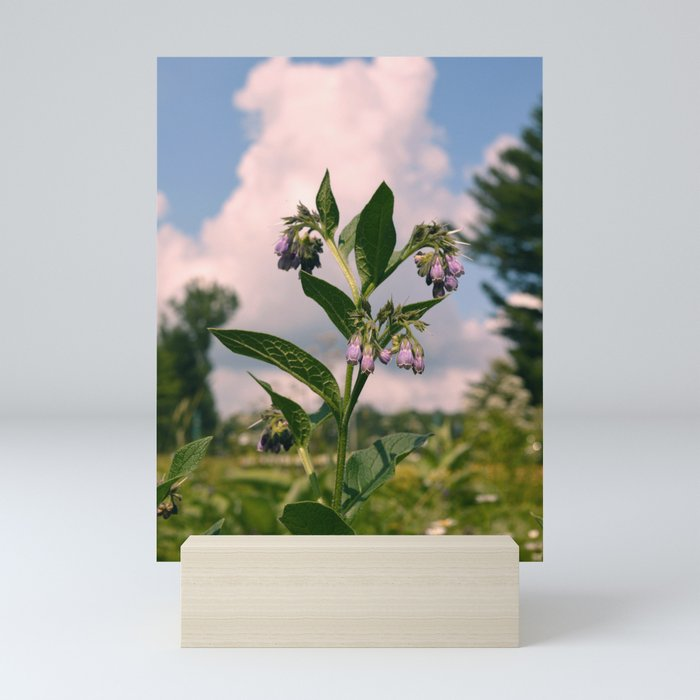 Healing Comfrey Plant with Flowers Mini Art Print