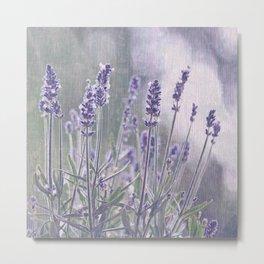 lavender 2 Metal Print